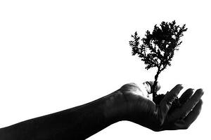 IHI Blgo Image - Why Imporvement Needs Nurturing